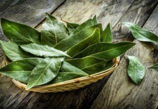 Defne Yaprağının Faydaları Nelerdir? Defne Yaprağı Nasıl Yakılır?
