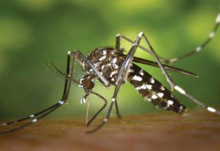 Zika Virüsü Nedir? Belirtileri ve Tedavisi Nedir?