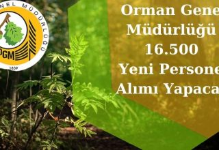 Orman Genel Müdürlüğü 16.500 Yeni Personel Alımı Yapacak!